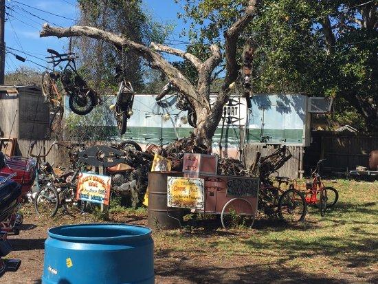photo of iconic hanging tree at Last Resort bar